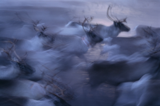 Image reindeer by BMJ / Shutterstock