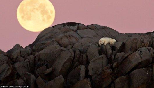 Moon Bear,